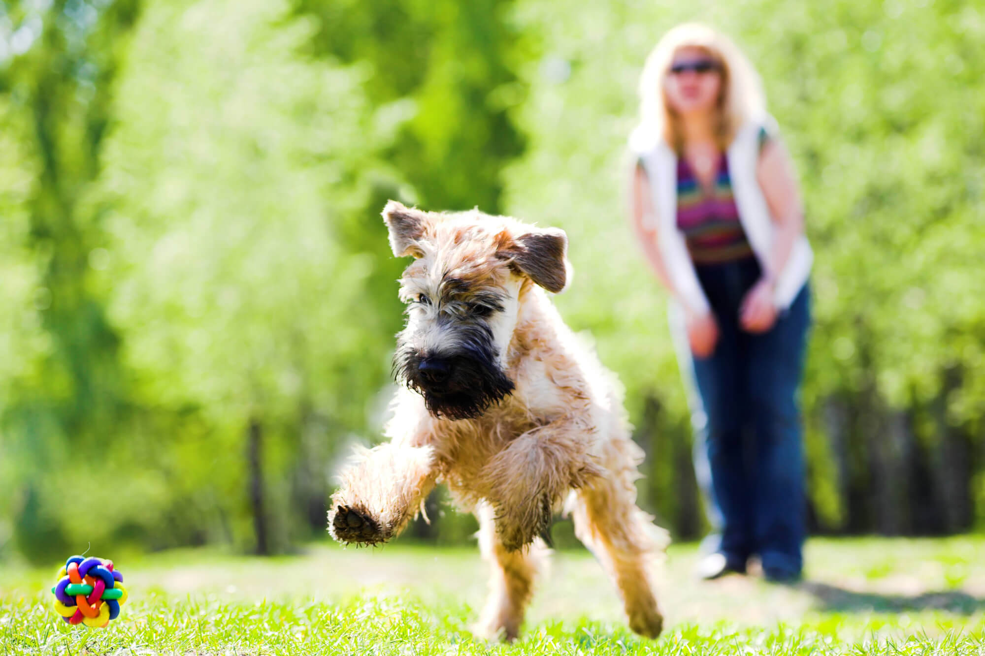 Plano De Saúde Para Pet: Como Escolher O Melhor?