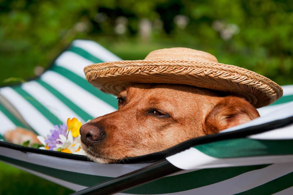 Serviços Para Pet: Como Inovar No Cuidado Do Seu Animal?